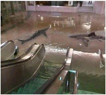 Uragano Sandy - Fotomontaggio squali Centro Commerciale
