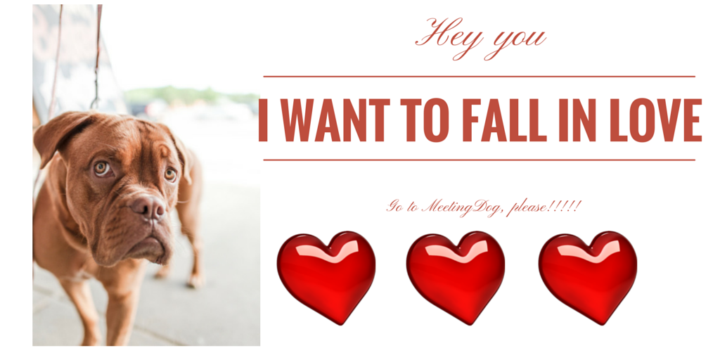 Photo of MeetingDog, fall in love with a dog